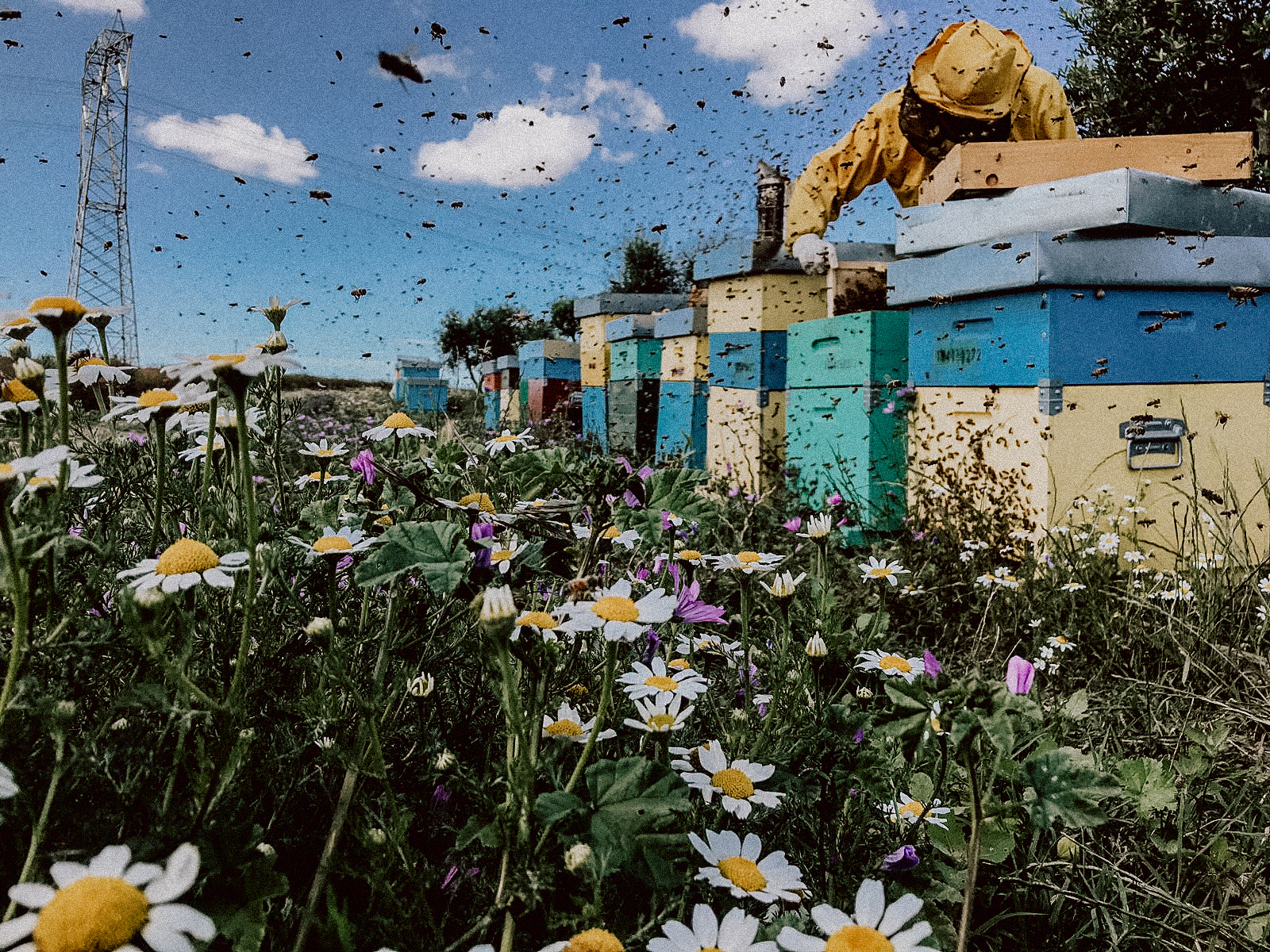 FOLLOW THE BEES